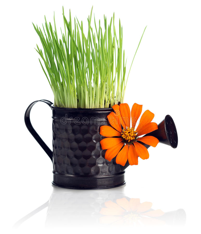 Watering can with grass & flower royalty free stock photos
