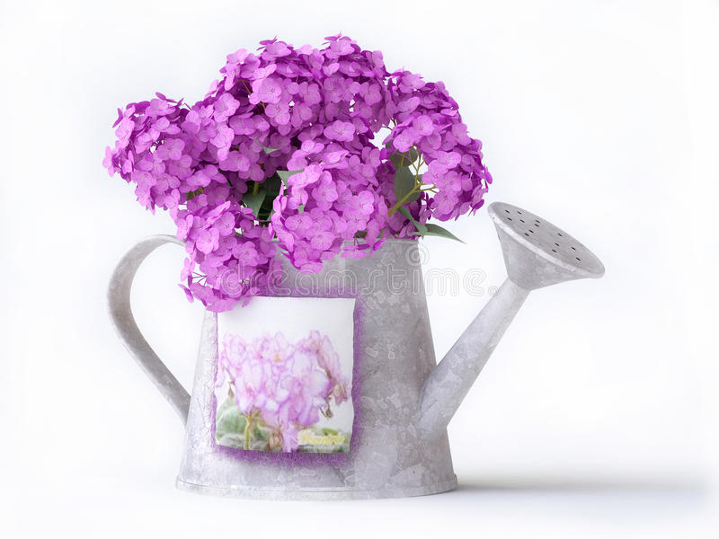 Download Watering-can With Pink Flowers Stock Illustration - Image: 17268051