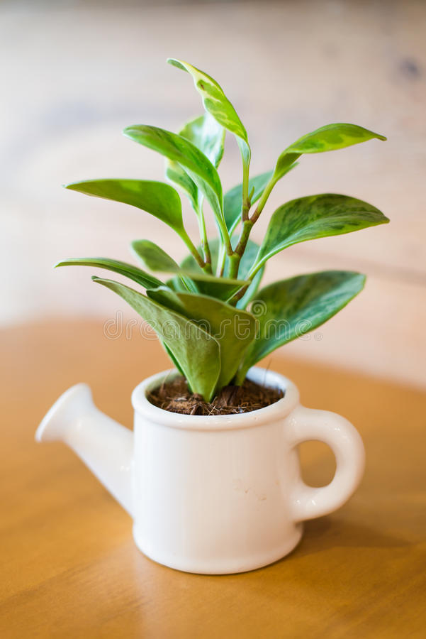 Watering can and plant over stock image