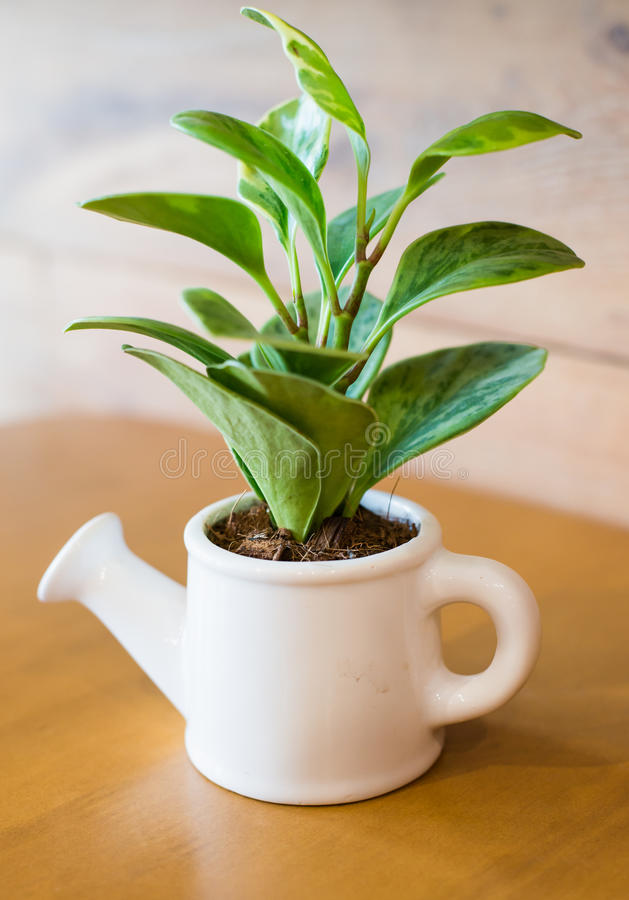 Watering can and plant over royalty free stock images