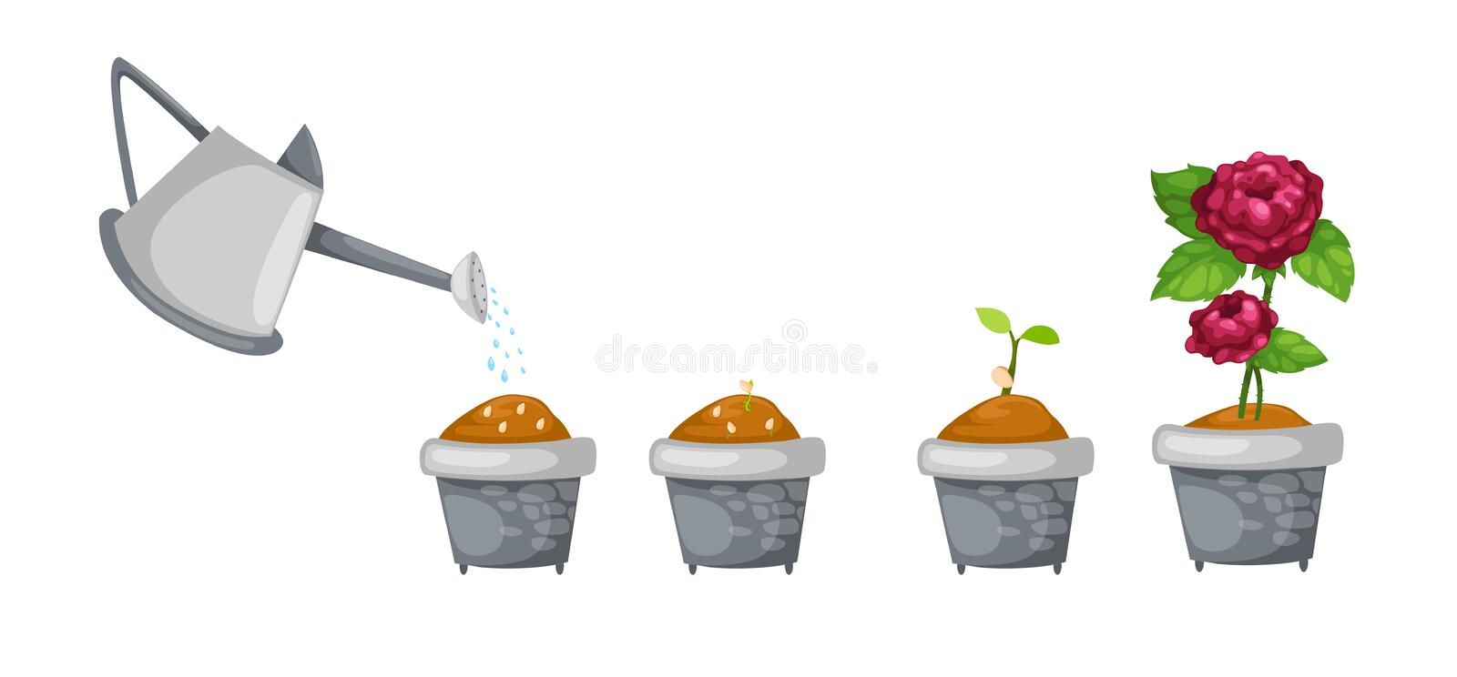 Watering can with rose life cycle vector stock illustration