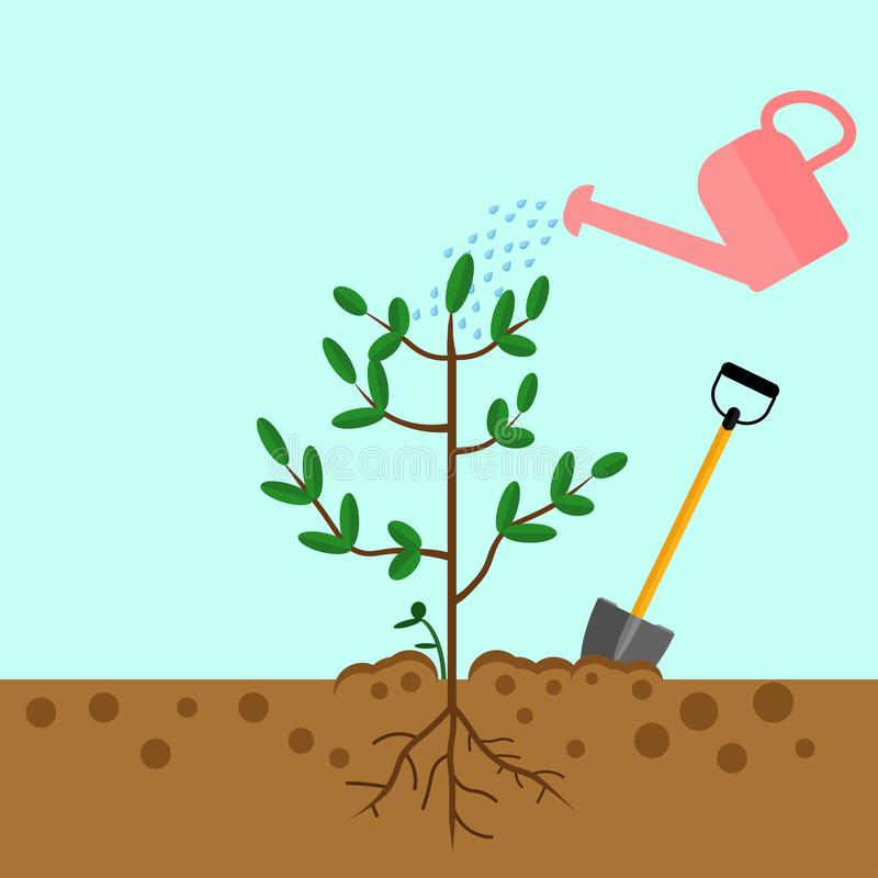 Watering can sprays water drops. New plant, sprout, sapling with shovel, spade isolated on background. Gardening, planting process stock image
