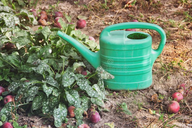 Watering can stands in the garden stock photo