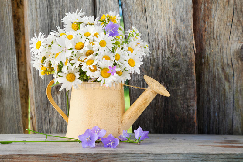 Watering can with summer daisies flowers on wooden background. Watering can with summer bouquet of daisies flowers on wooden background royalty free stock images