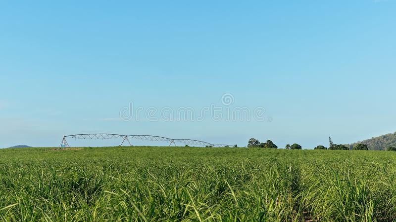 Watering A Crop Of Young Sugar Cane On A Plantation royalty free stock photo
