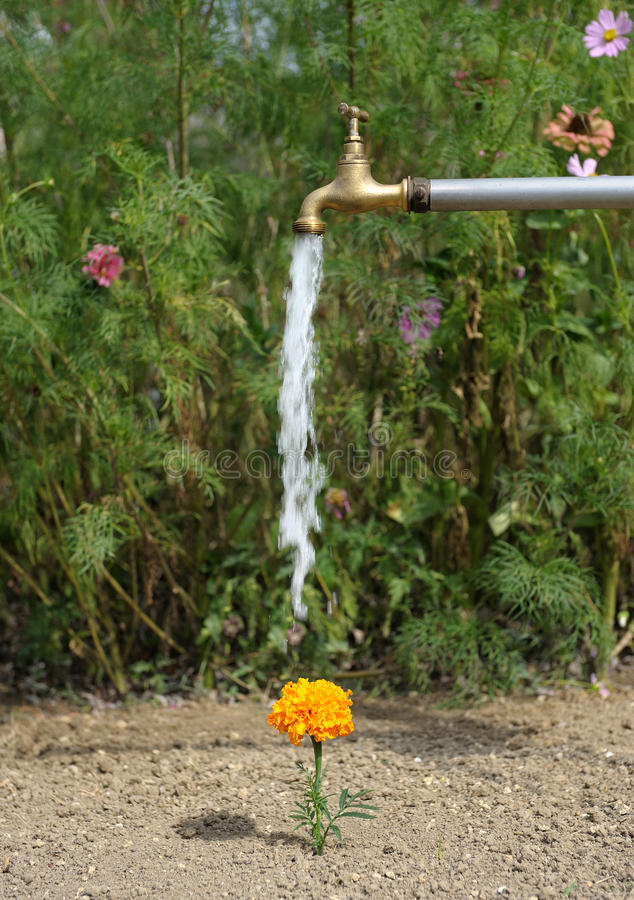 Watering flower royalty free stock photos