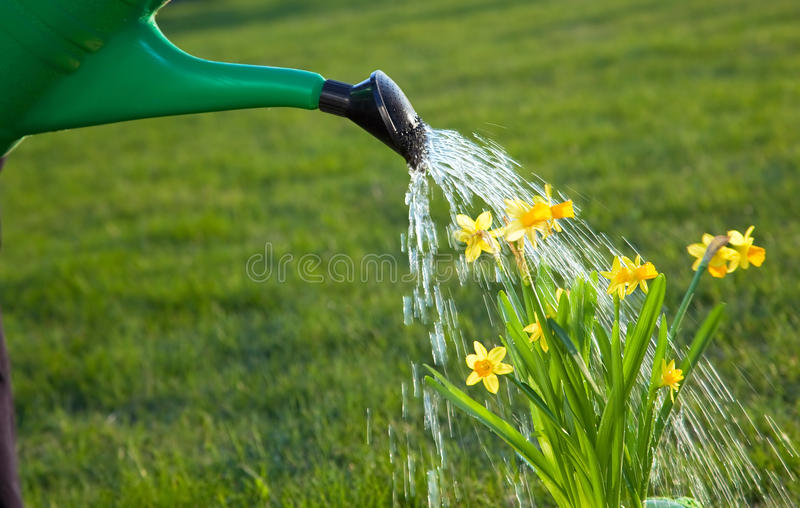 Watering the flowers stock images