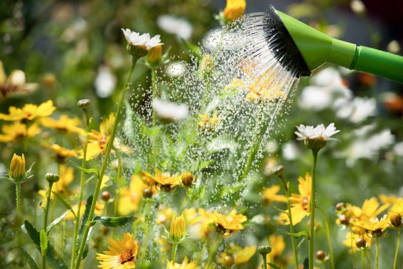 Watering flowers stock photos