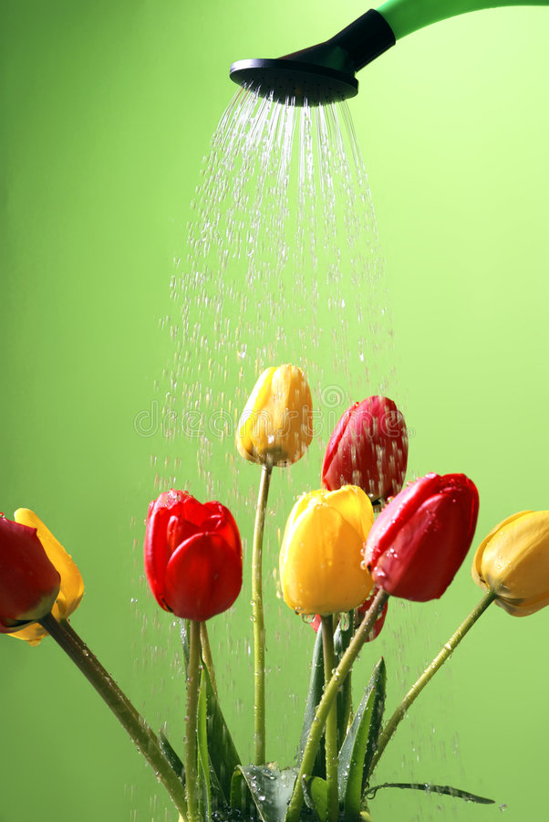Watering the flowers stock photography