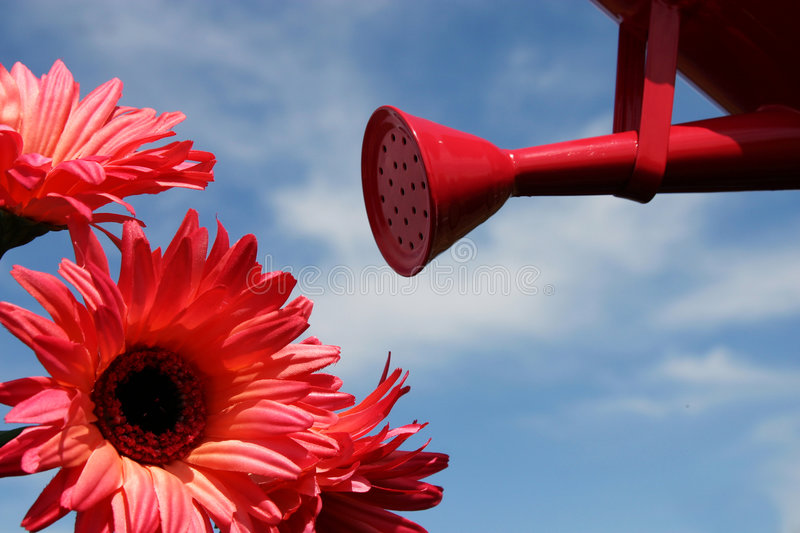 Watering flowers. Pink watering can with pink flowers royalty free stock photos