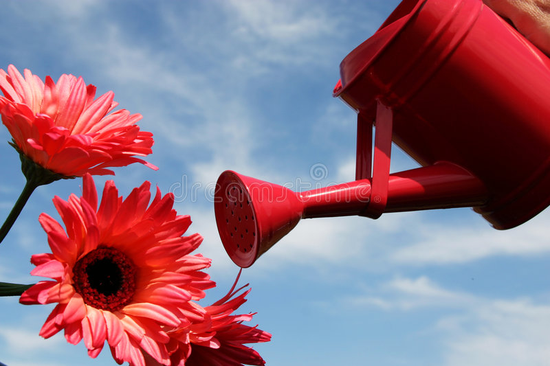 Watering flowers. Pink watering can and flowers in a blue sky stock photo