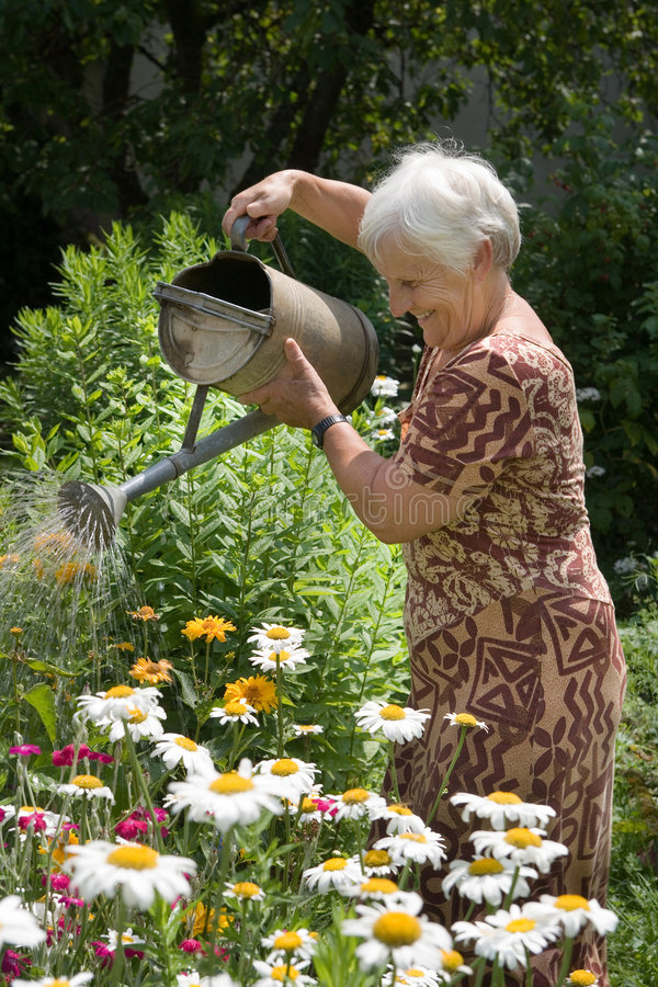 Watering flowers with can. Grandmom is watering the flowers in her garden stock photos