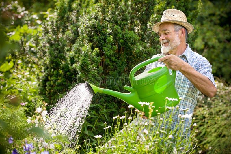 Watering flowers in the garden stock photos