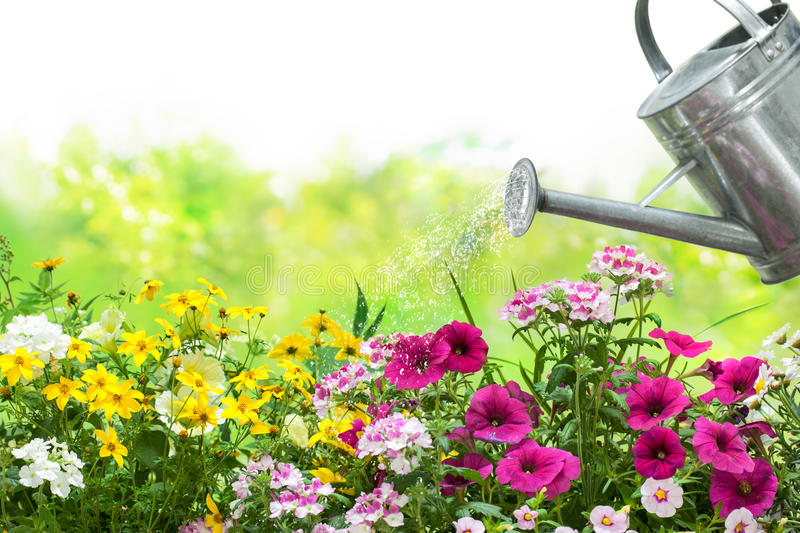 Watering flowers in the garden royalty free stock images