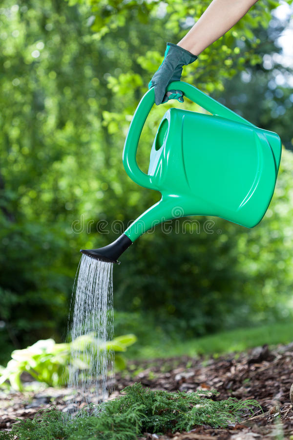 Watering the flowers royalty free stock image