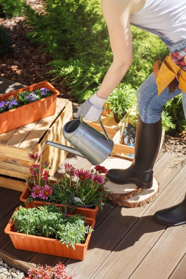 Watering flowers on wooden terrace stock image