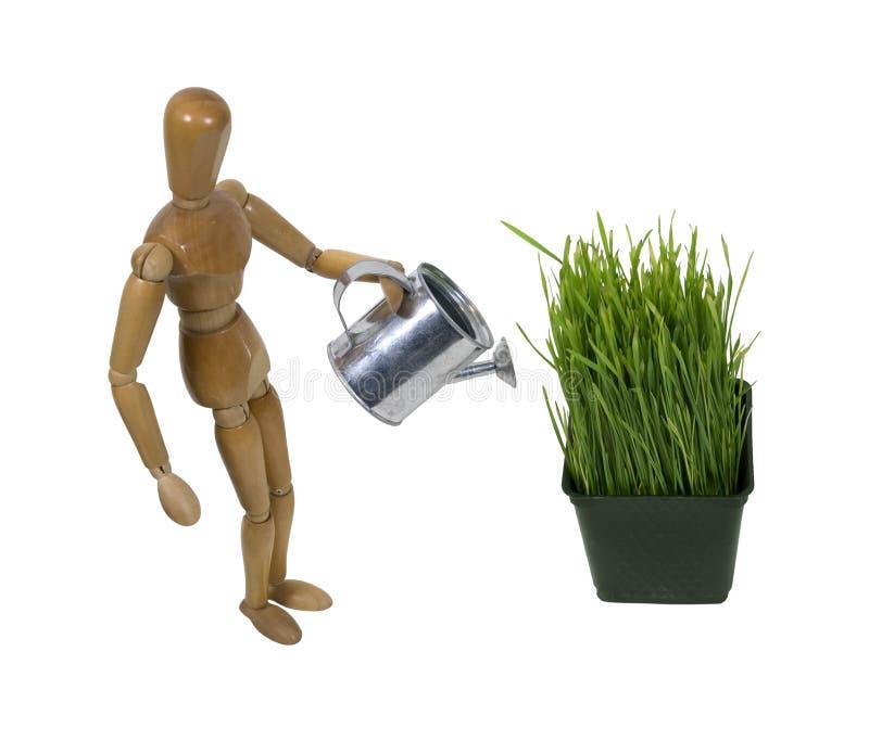 Watering the garden stock image