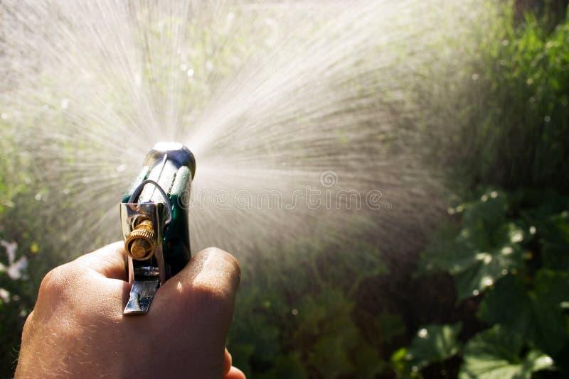 Watering garden royalty free stock image