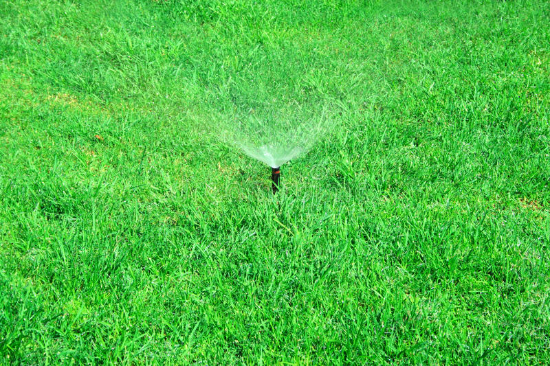 Download Watering grass stock photo. Image of growth, bright, liquid - 12032838