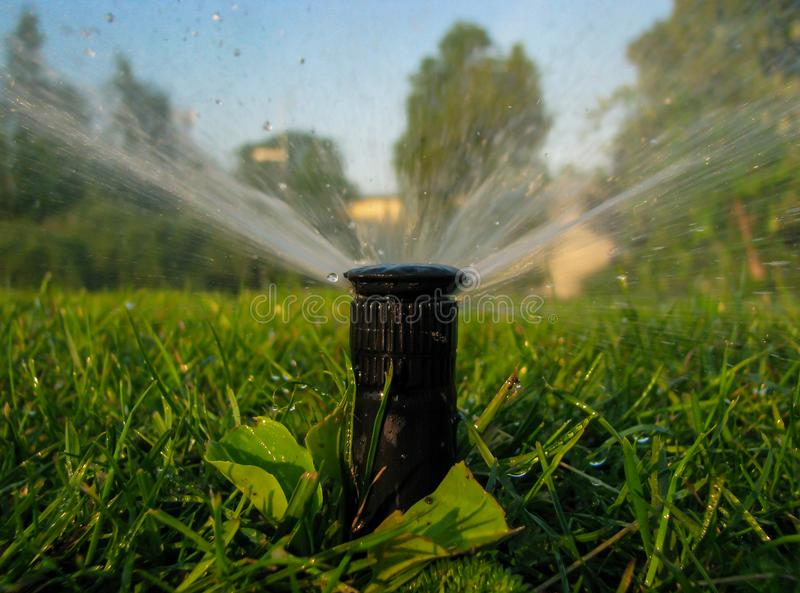 Watering the grass, water, drops stock images
