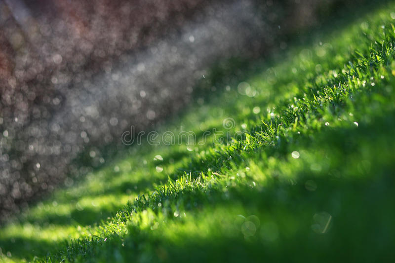 Watering green lawn stock photo