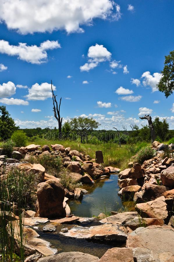 Download Watering hole stock photo. Image of majestic, rocks, reeds - 9581730