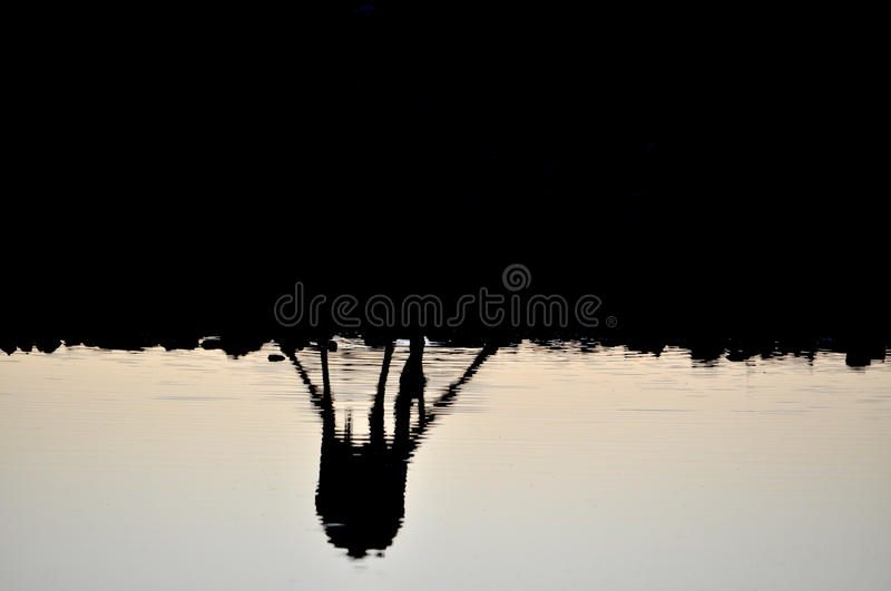 Watering hole at sunset royalty free stock photography