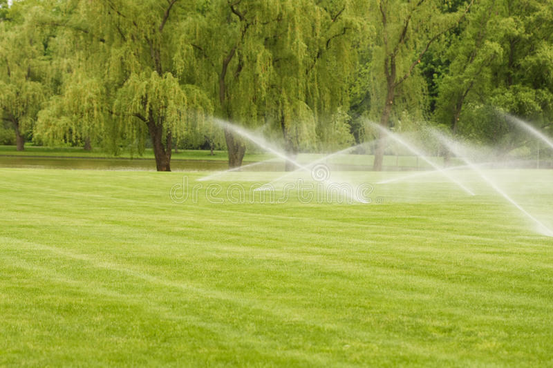 Download Watering the Lawn stock image. Image of lawn, tree, spray - 14129029