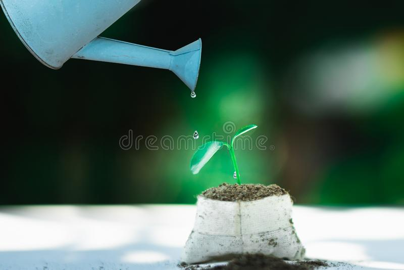 Watering Natural sprout growing in small pot. Natural anc care concept royalty free stock photos