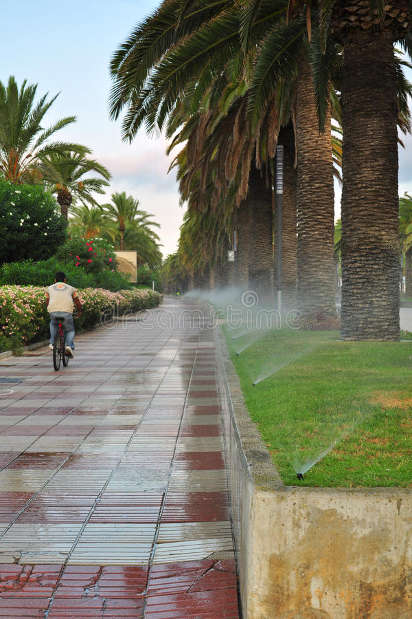 Free Watering Of Palm Tree Alley Stock Photo - 21353220
