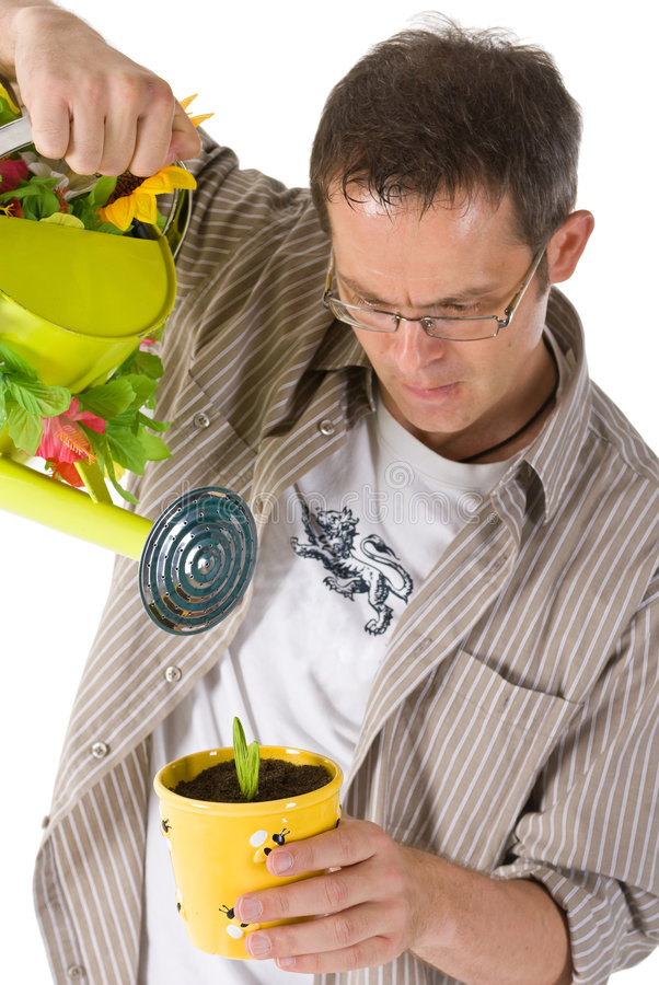 Watering a plant. Man watering a potted plant stock images