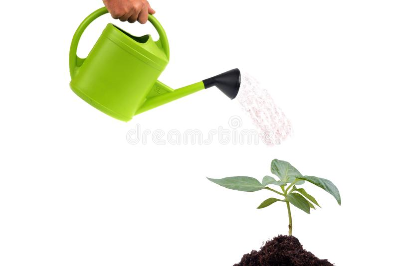 Watering a plant on a white background royalty free stock photos