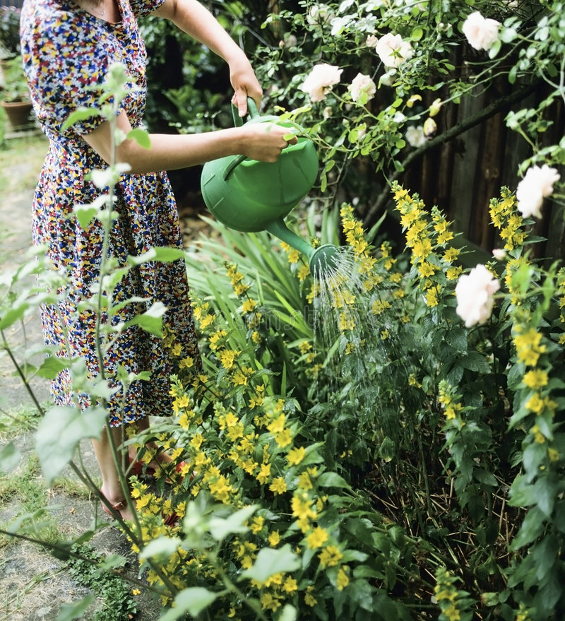 Watering Plants Royalty Free Stock Photography