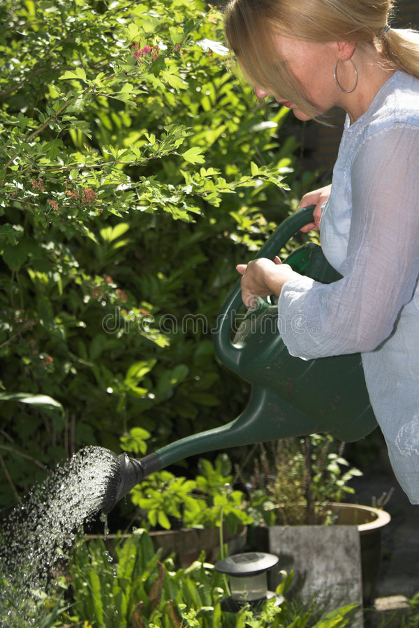 Watering the plants stock image