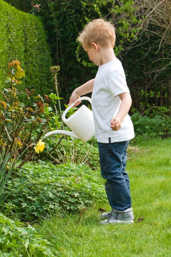 Watering plants stock photos