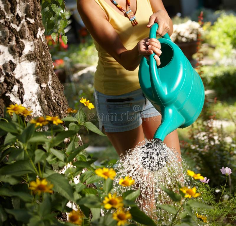 Download Watering Plants At Summertime Stock Image - Image: 24192085