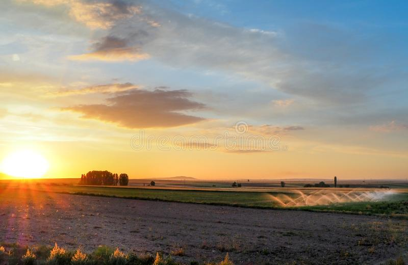 Watering process in the field at sunset. irrigation of crops grown in the field stock images