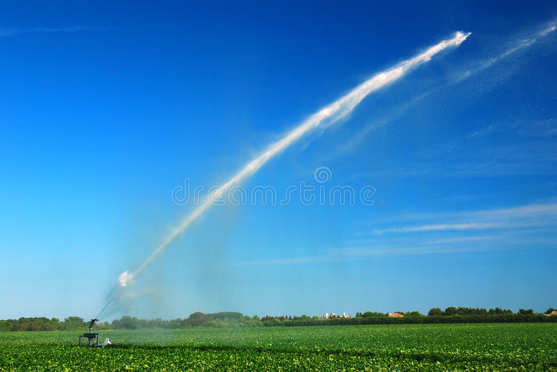 Watering the Sod. A sprinkler waters a sod form on the North Fork of Long Island royalty free stock images