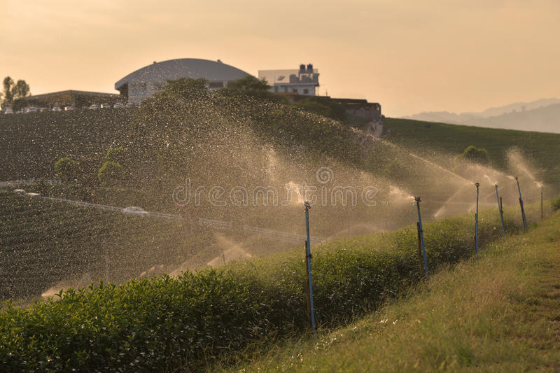 Watering sprinkler spraying water over tea plantation stock photos