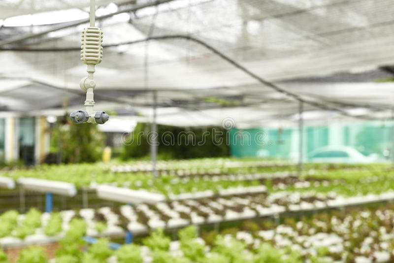 Watering system in Vegetables hydroponics garden royalty free stock image