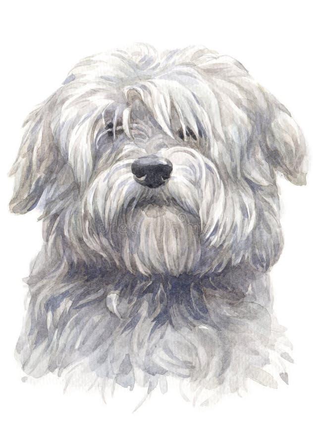 Waterkleur het schilderen van Katoenen du Tulear witte hond 045 vector illustratie