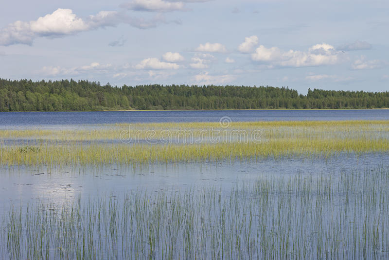 Waterlandschap met een rushy meer stock foto