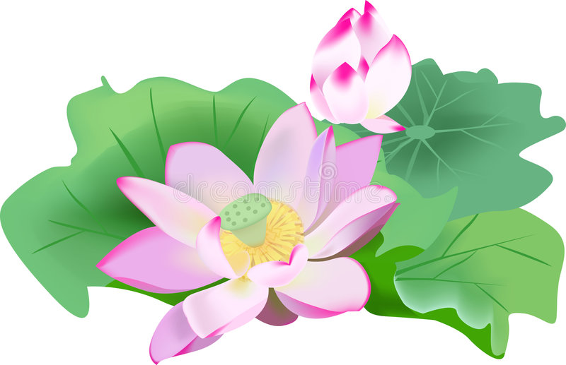 Waterlelie royalty-vrije illustratie