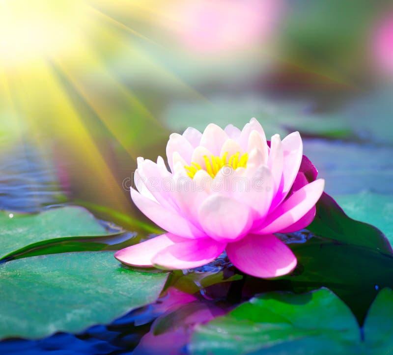 WATERLELIE IN EEN VIJVER De illustratie van de bloemZen van Lotus stock afbeelding