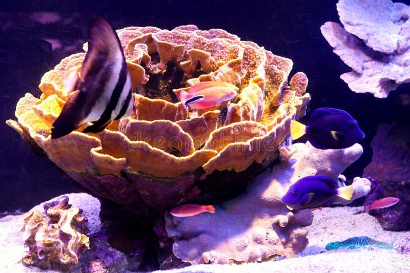 Waterlelie onderwater royalty-vrije stock afbeeldingen