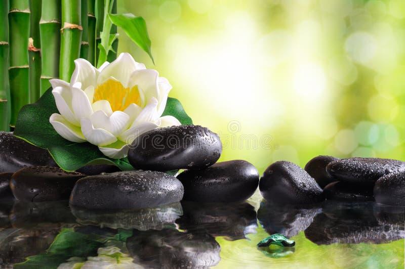 Waterlelie op veel zwarte die stenen in water worden weerspiegeld royalty-vrije stock afbeelding