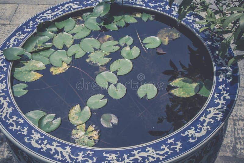 Waterlelies in blauwe en witte porseleinvaten royalty-vrije stock foto's