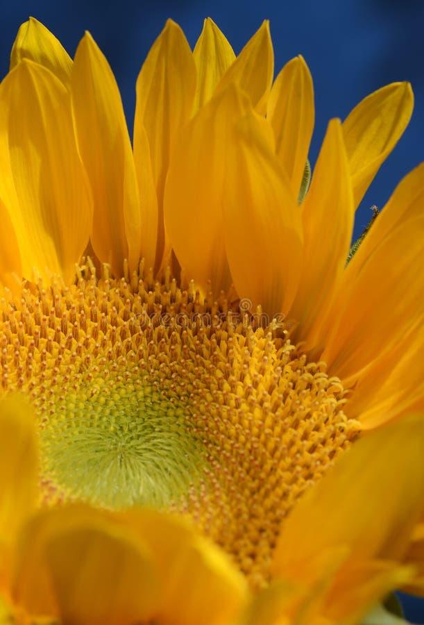 Waterlelies in een Tuinvijver stock fotografie