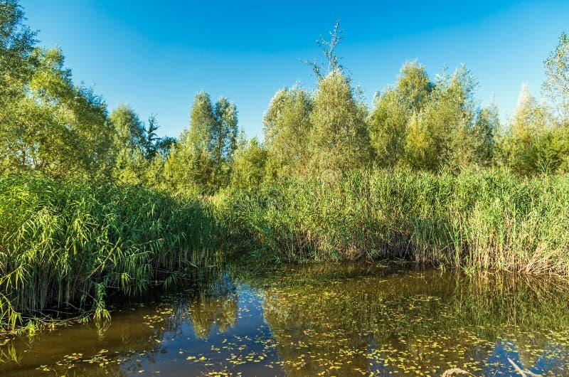 Waterlelies en andere installaties rond de vijver stock foto's
