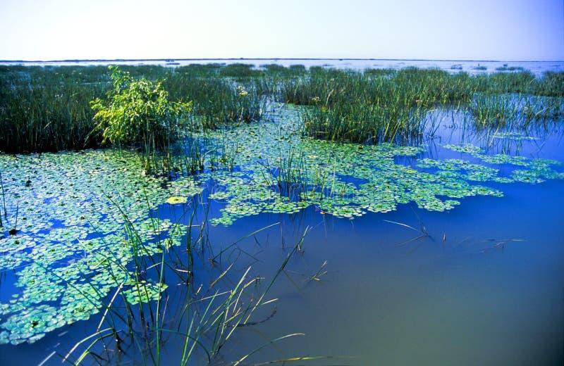 waterlilies стоковые изображения rf